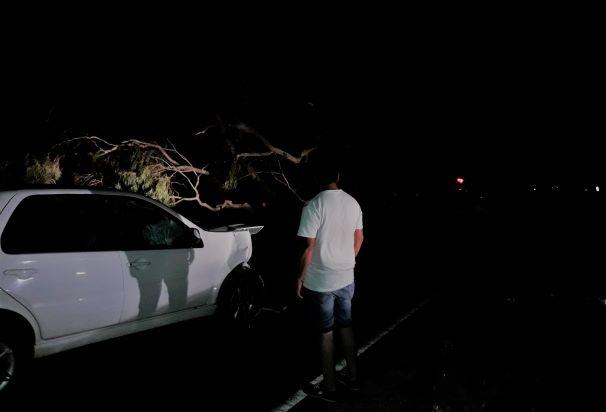 #SantaRosa | Por el viento, se cayó un eucalipto sobre un auto en la 35