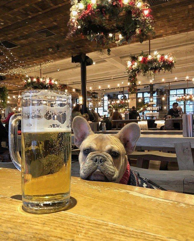 H A I R  O F  T H E  D O G For some, the show must go on #schlossbrau #beer #manchester #albertsschloss