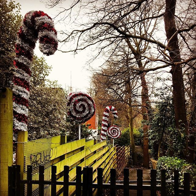 Loving the festive lane off Sydenham Hill. Hadn't noticed it before, it's pretty cool. #christmasiscoming🎄 ••• #sesussed #selondon #outdoorchristmasdecorations #loveselondon #selondonliving #dulwichwoods #sydenhamhillwood #sydenhamhillwoods