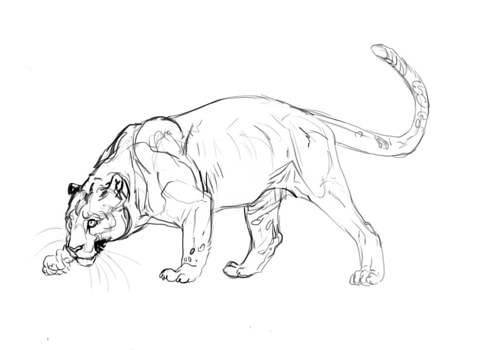 Vantid On Twitter Jaguar Sketches Where I Got A Little Impatient