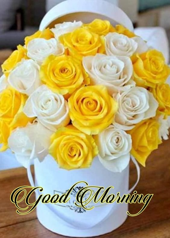 Rani Gill On Twitter Goodmorning Flowers Dec 2018 Merrychristmas Fresh Day Happy Week Monday Welcome Wow Fresh Day Happy Morning 24th Xmas Eve Dec End Month Wishing You All A
