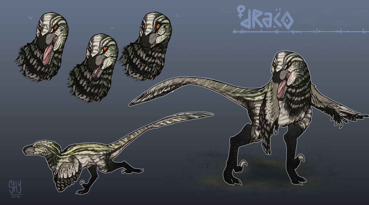 shyrahja on twitter my very first attempt at a raptor refsheet i was able to work on for baby dracolisk shown is her oc draco c shyrahja dakotaraptor dinosaur dino conceptart https t co q7nyruyhkg shyrahja dakotaraptor dinosaur dino