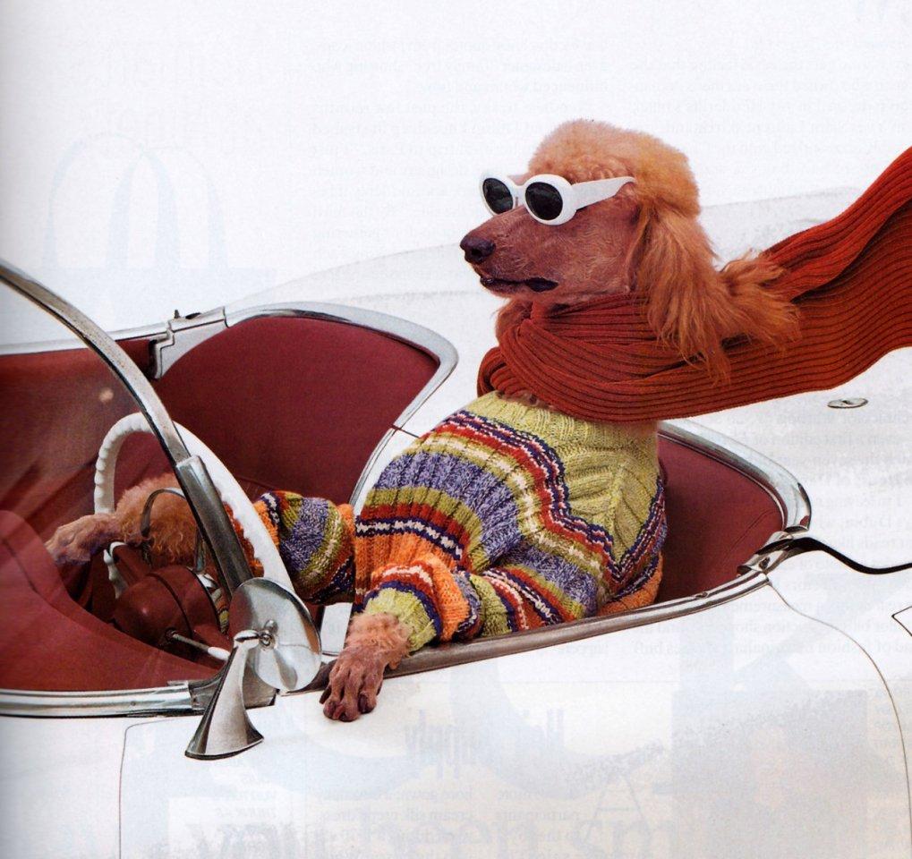 можете собака за рулем картинки смешные инстаграме тимати
