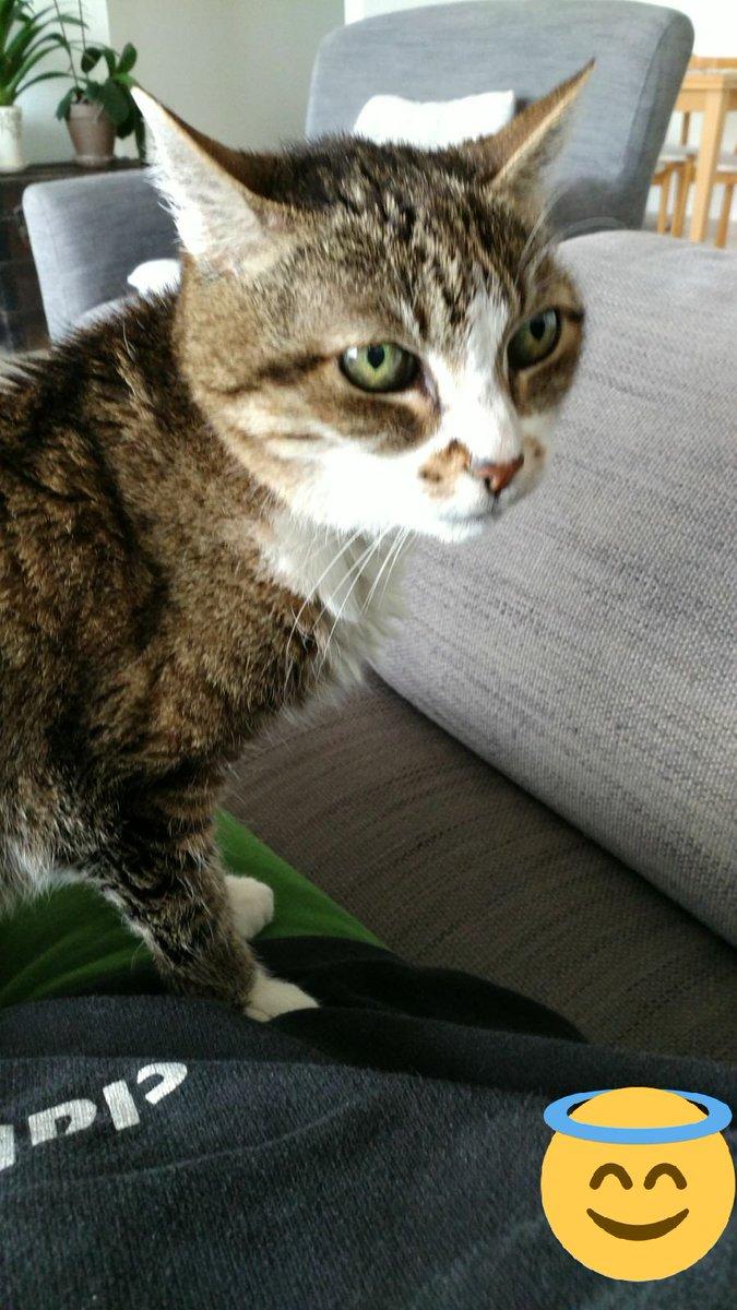 הלילה חלמתי משום מה על החתולה זיכרונה לברכה בת 24 היתה  מעניין למה....
