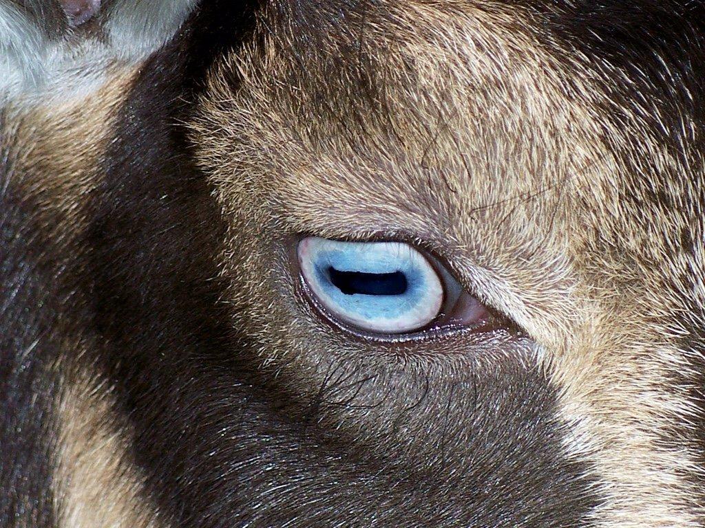 интерьер глаза барана фото первую половину