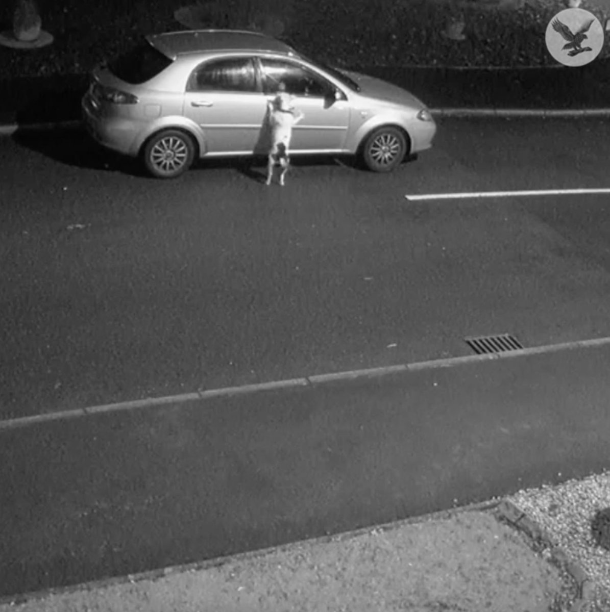 CCTV shows moment dog is abandoned at side of road right before Christmas