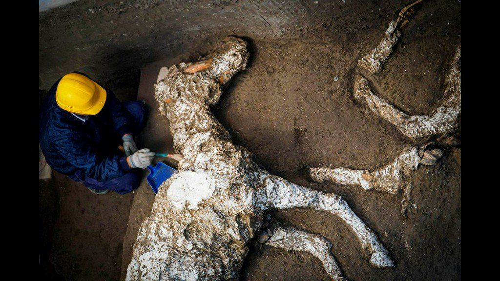 Horse, petrified but still harnessed, discovered in Pompeii might have belonged to military general https://t.co/yNyuATdMT3