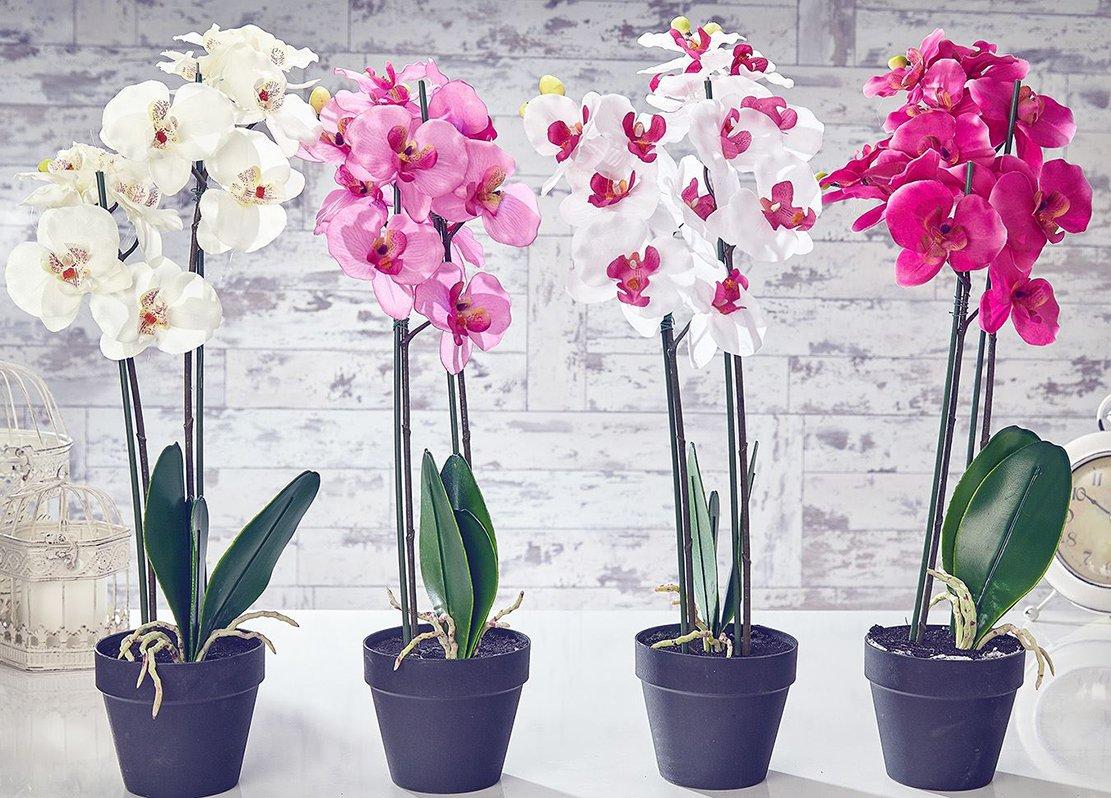 Картинки цветы комнатные орхидеи, картинках для детей