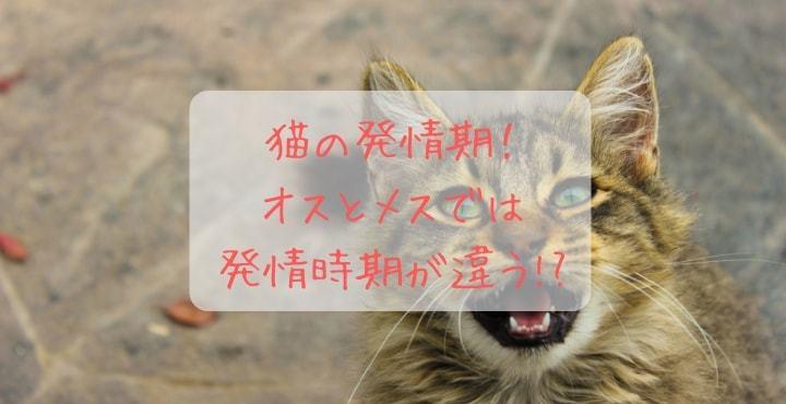 発情 期 の 猫 の 鳴き声
