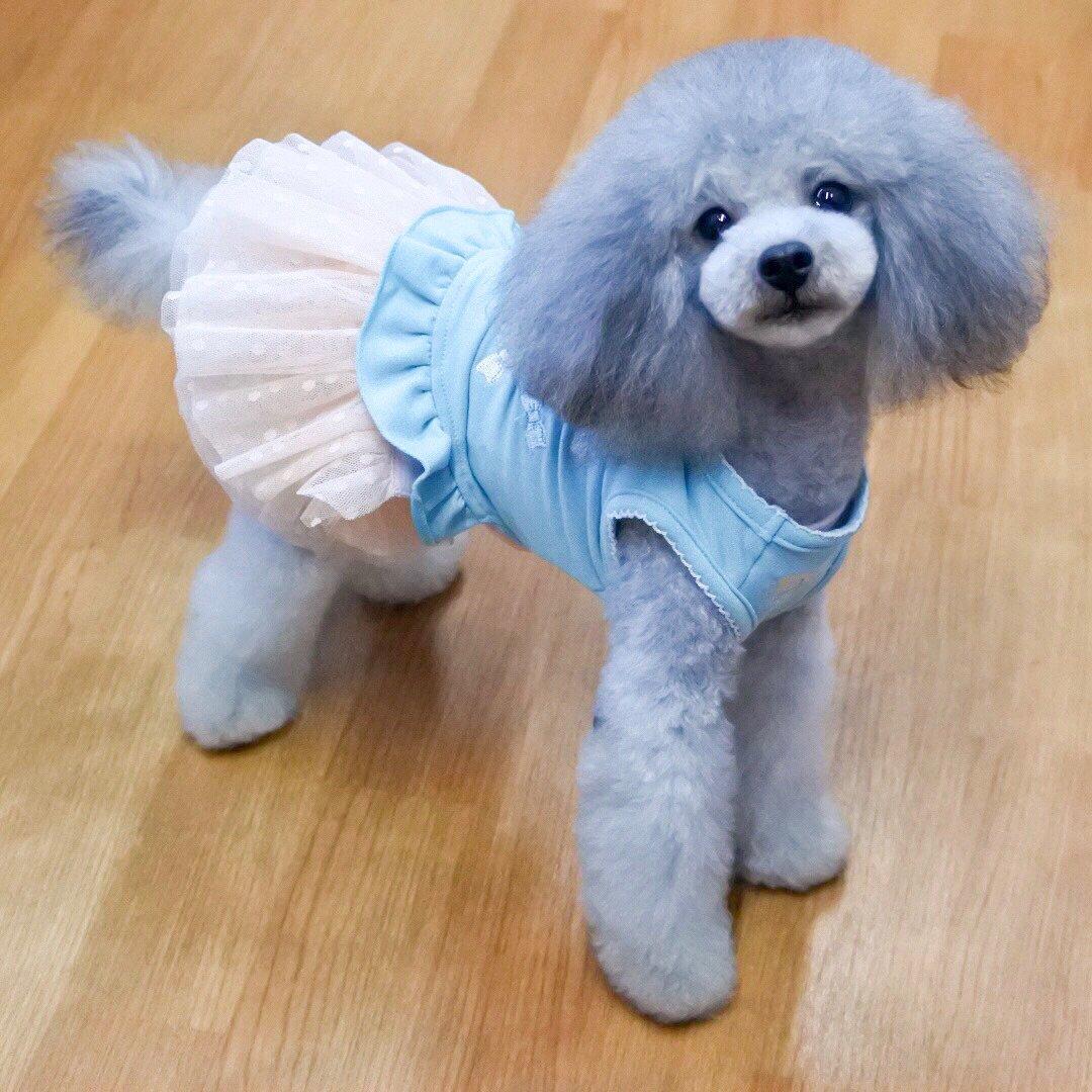英、子犬や子猫の販売に規制導入のニュースを聞いて ー アメブロを更新しました #犬のいる生活 ameblo.jp/yorikokoro/ent…