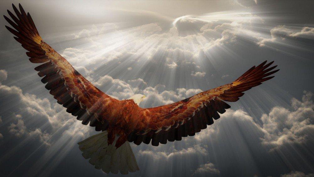 Картинки надписями, видео поздравление с годом парящего орла