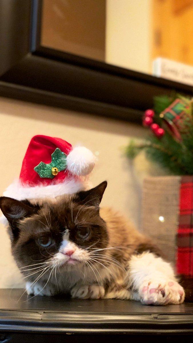 Grumpy Cat Realgrumpycat Twitter