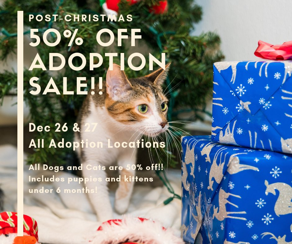 San Antonio Pets Alive! on Twitter:
