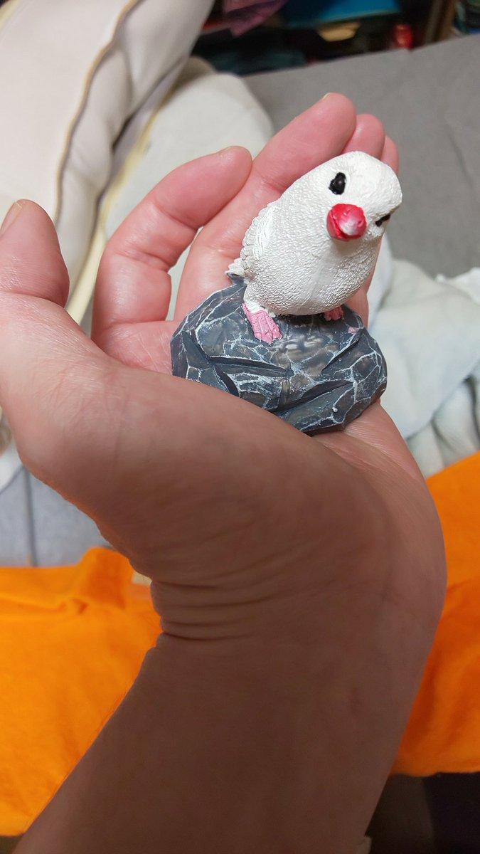 test ツイッターメディア - 100円ショップSeriaにやっと白文鳥と遭遇! #100円ショップ #Seria #文鳥 https://t.co/kVplqCmbPT