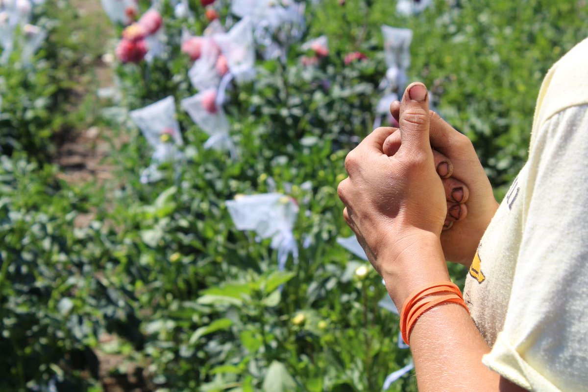 We love seeing dirty hands! It means you're connecting with the Earth, learning, growing, and are outside in nature. What more could you ask for?   #DirtyHands #Growers #Osborne #OsborneSeeds #OsborneSeed #OsborneQualitySeeds #Seeds #farming #Vegetables #2019 #Farmers #Farming https://t.co/UKwYshGGE8