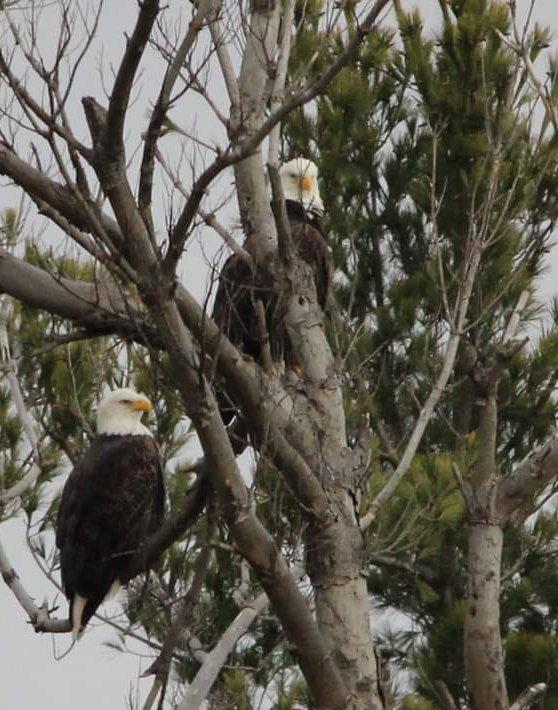 Eagles in Geneva (photo)