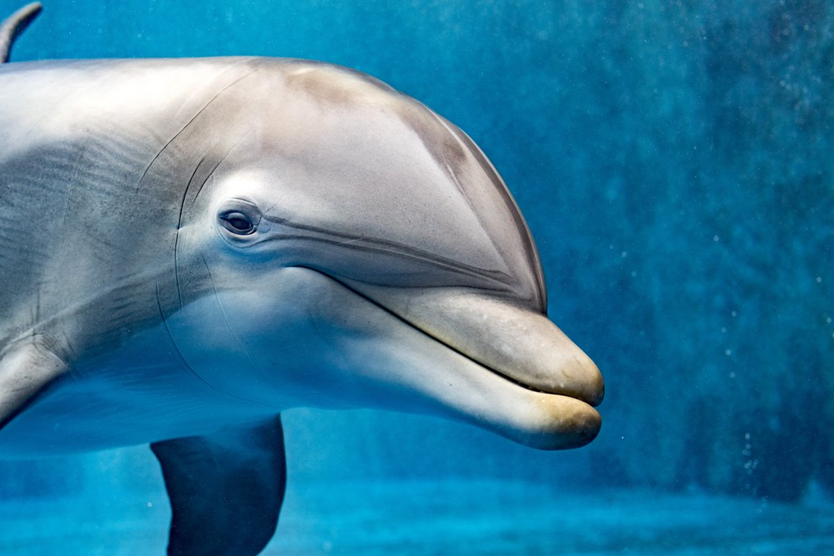 "Yummypets on Twitter: ""#DidYouKnow that dolphins sleep with one ..."