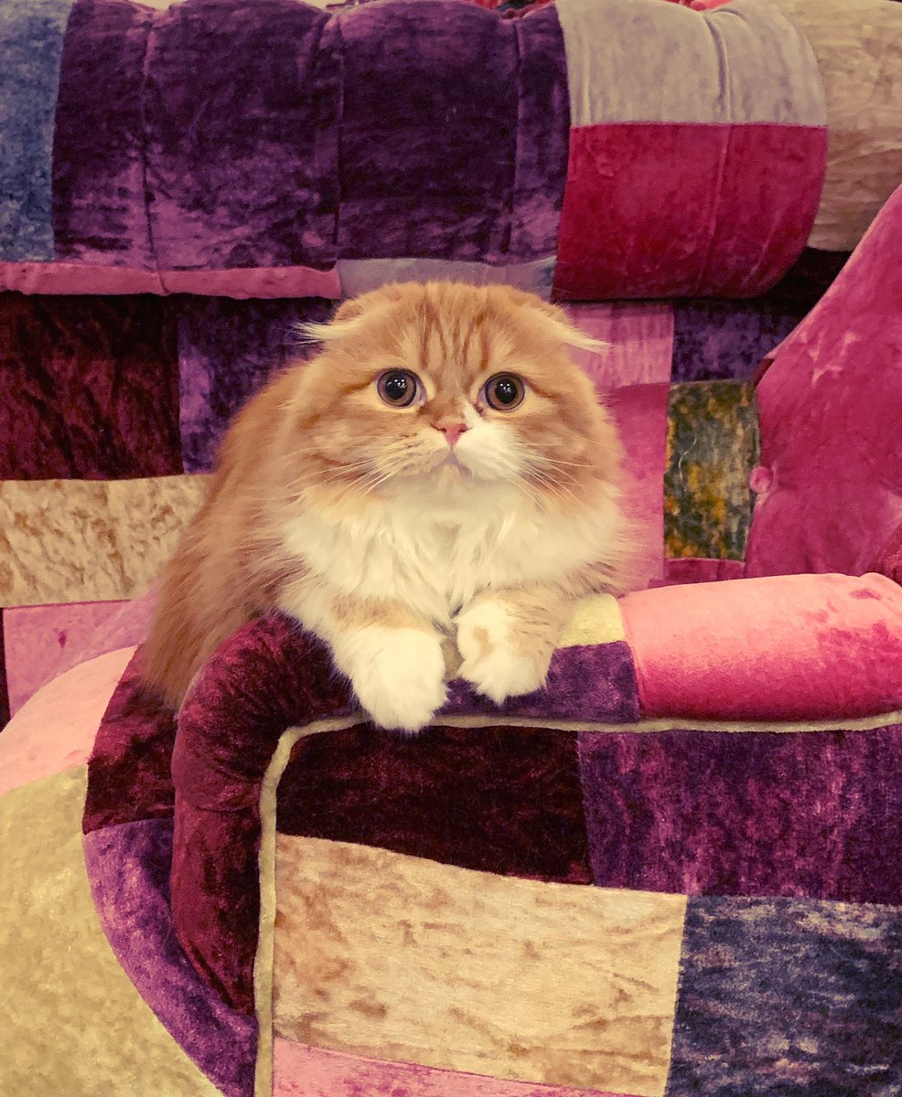 ウチのぬしです。  #もふこ #もっちゃん #猫 #仙人みたいだけど女の子