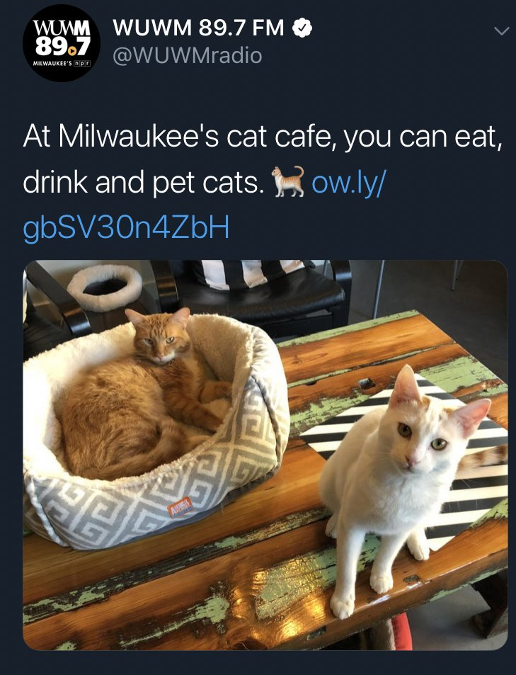 Clarification: At Milwaukee's cat cafe, you can pet cats. You can drink. You can eat.