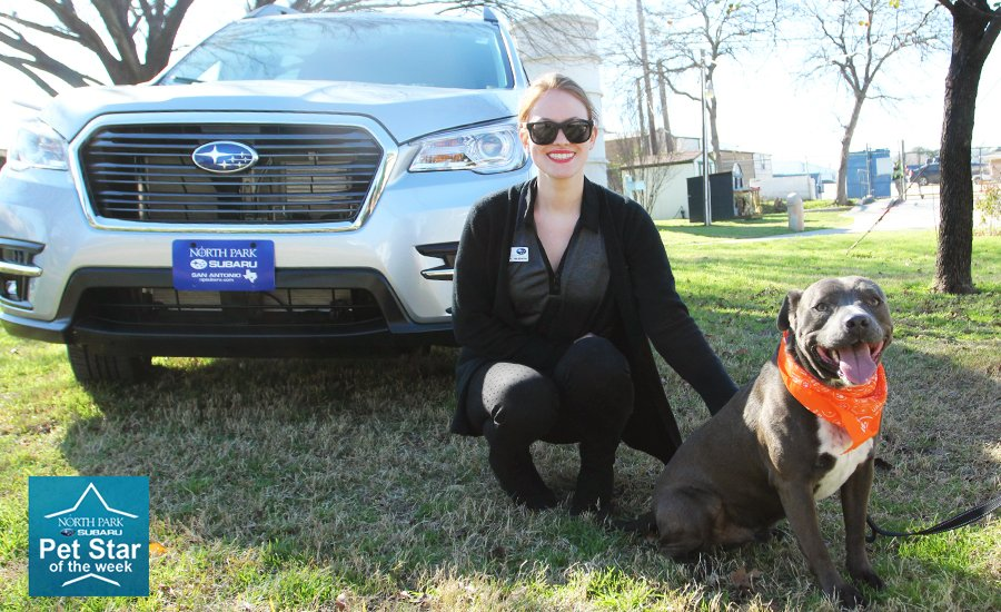 North Park Subaru >> Animal Defense League Of Texas On Twitter Our Final 2018