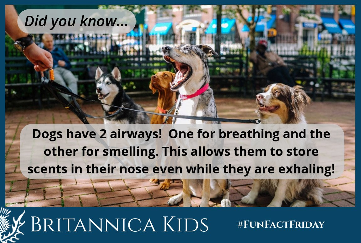 RT @BritannicaKids: Do you know how dogs can remember a scent? #FunFactFriday https://t.co/NQ1vt5y6jz