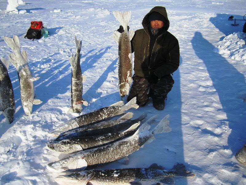 Якутия зимния рыбалка на щуку