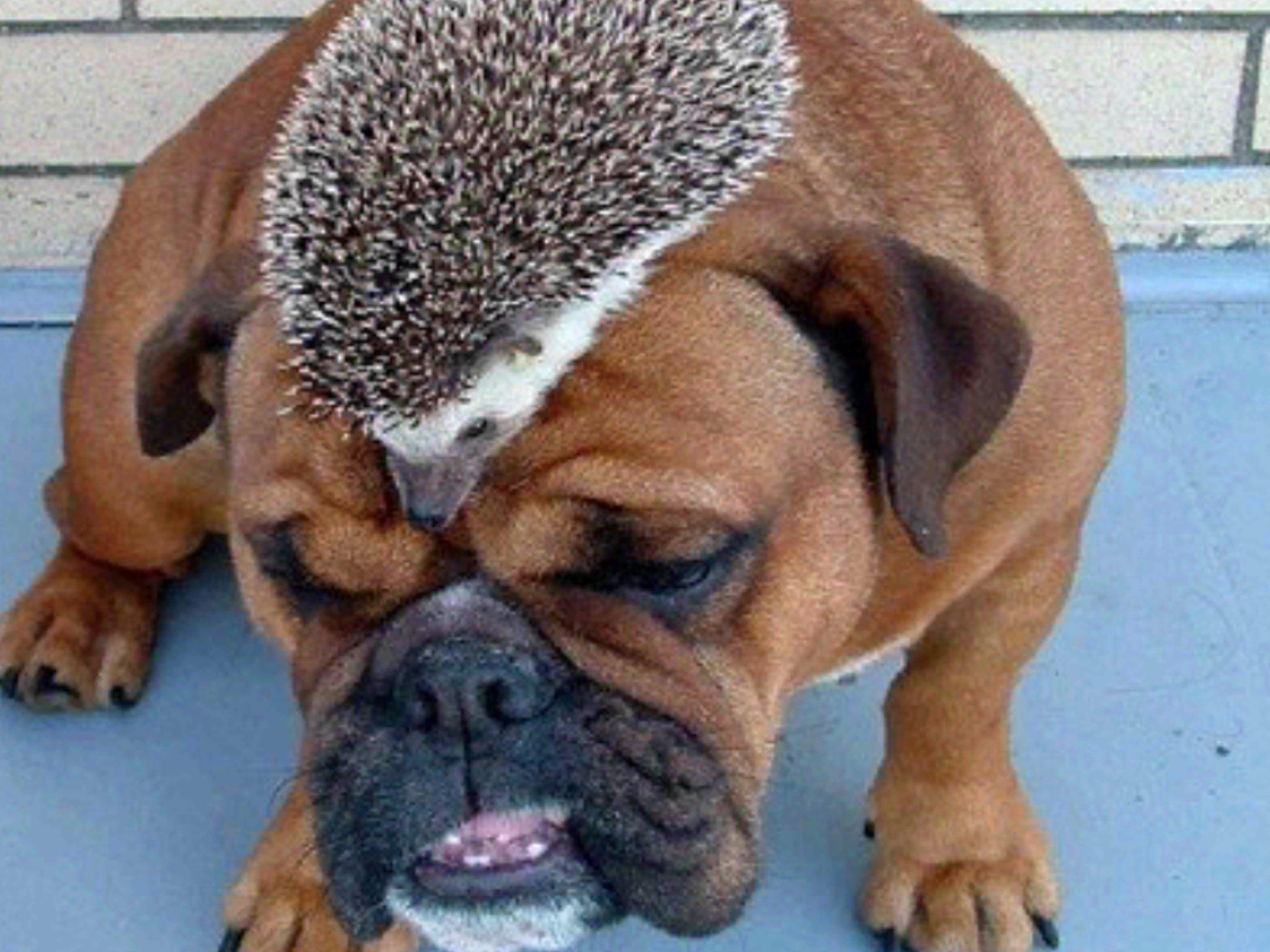 Картинки смешные собаки со словами