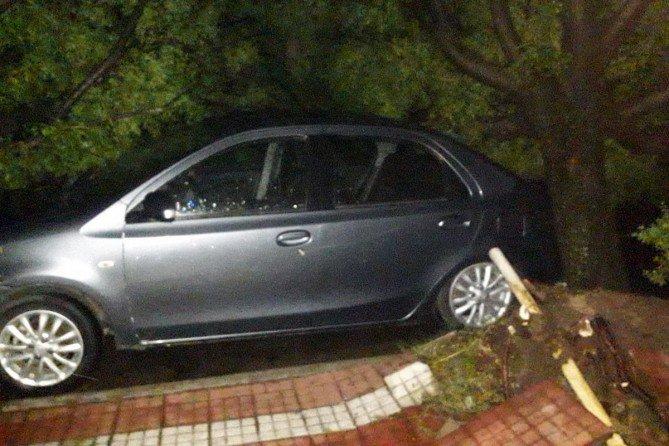 #GeneralPico | Otro auto fue aplastado por árboles