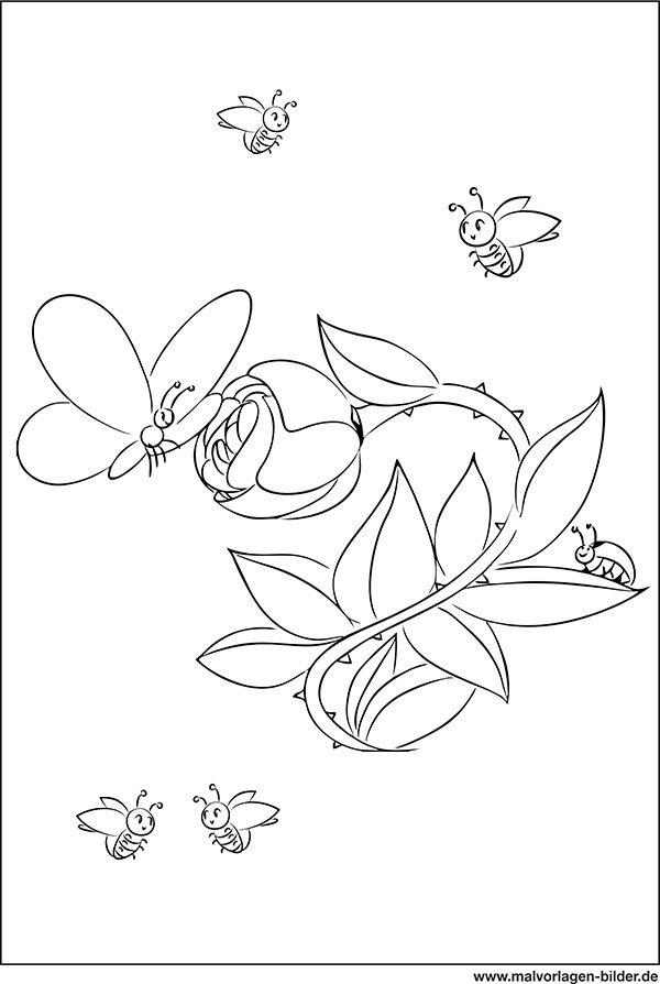 Malvorlagen Bilder On Twitter Blume Schmetterling Und Käfer