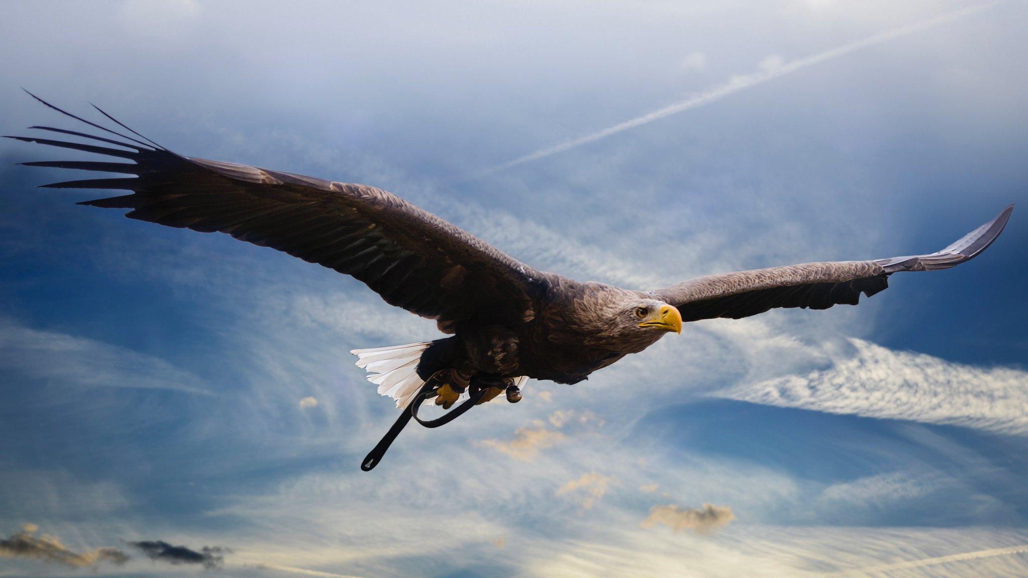Год парящего орла смешные картинки