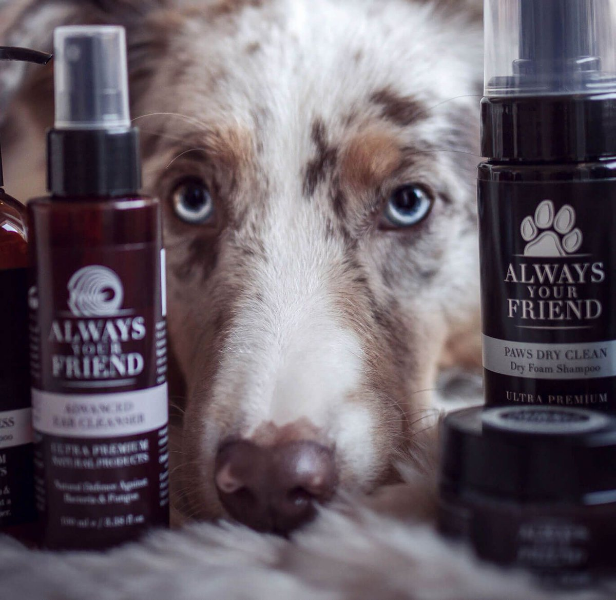 9332bb44adf0 ... oils. https   buff.ly 2CDELOY  dogs  dogshampoo  petcare  dogscare   aloevera  oliveoil  essentialoils  handmade   Cretepic.twitter.com nKQhHh7tTL