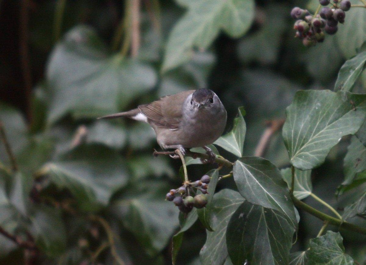 Vogels Nederland Tuin : A vogel tuinen de gezondste tuin van nederland
