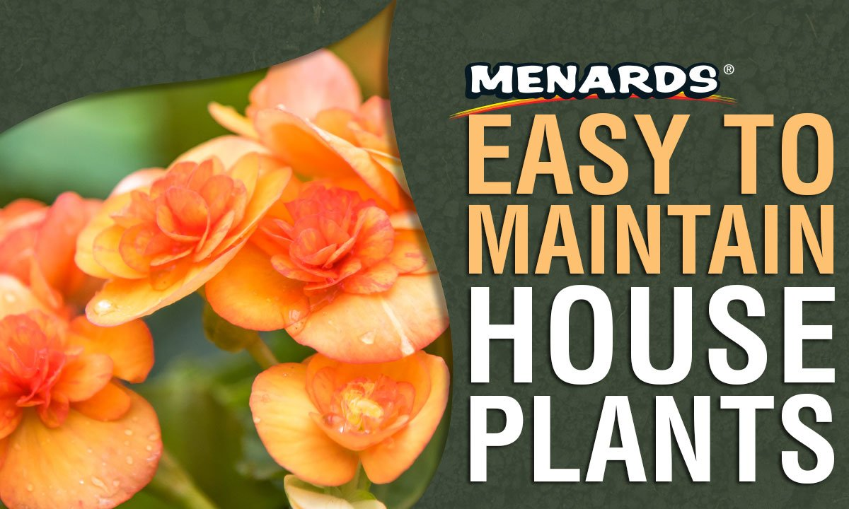 Menards On Twitter Liven Up Your Living E With Low Maintenance Houseplants Https T Co Jf8ppa4a7a