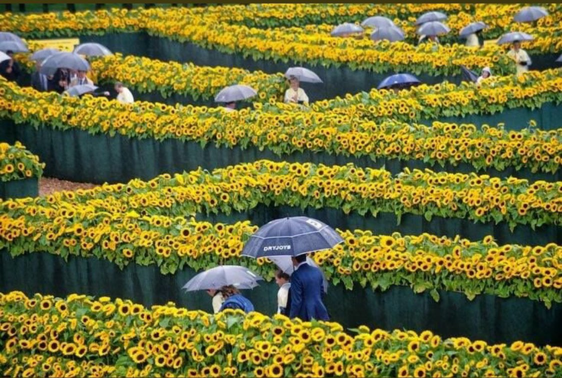 Van Gogh museum in Amsterdam, surrounded by 125k sunflowers. You're allowed to take home as many as you want.