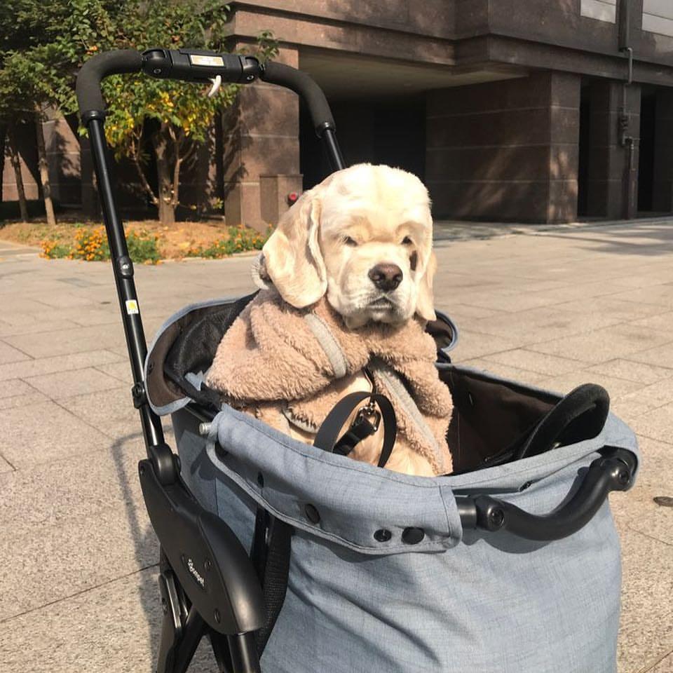Image result for kai jennie dog breed