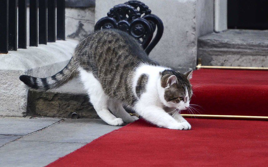Larry for PM. Surely? @Number10cat #Brexit #BrexitVote #brexitdeal <br>http://pic.twitter.com/JviCbPyQ14