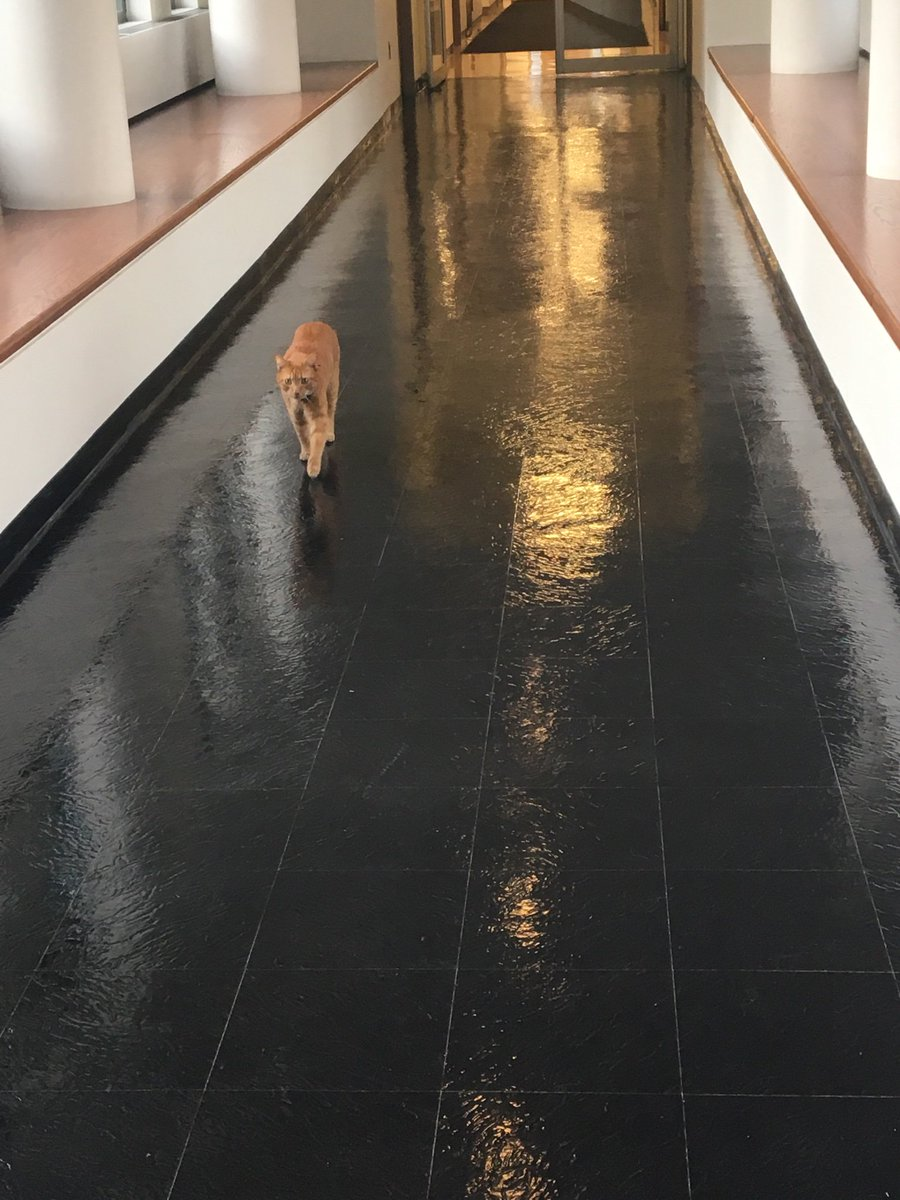 Well, here's something you don't see everyday: a cat wandering the halls of Harvard Law School. I'm used to seeing my colleagues' various golden retrievers. This is the 1st I've seen of the cat. I'm told he is a neighborhood cat who comes by from time to time.