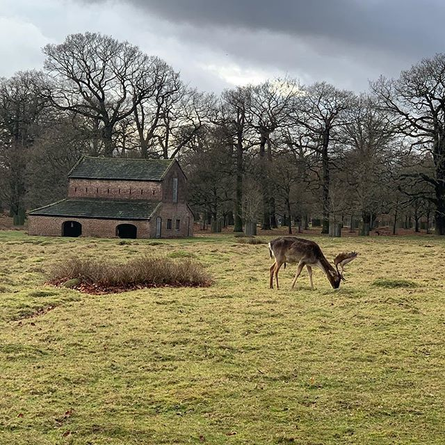 Lovely walk at @ntdunhammassey today with @trish4x  #altrincham #weekendwalking #health #scenery #dunhammassey #ohdeer <br>http://pic.twitter.com/McQBJjlTc6