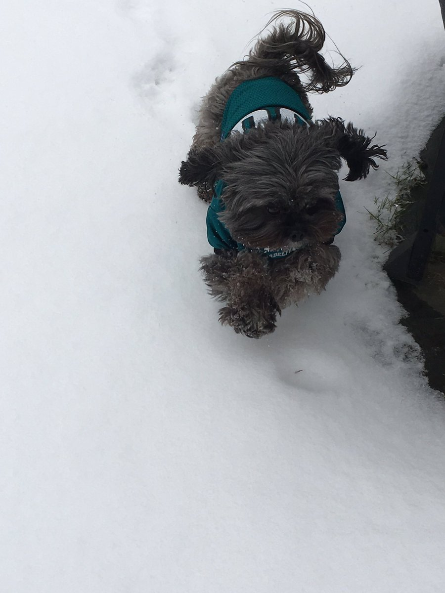 #fox29goodday @AlexHolleyFOX29 @FOX29philly @MikeFOX29  Penny Lane the snow beast is game ready!<br>http://pic.twitter.com/KCePkPotJK