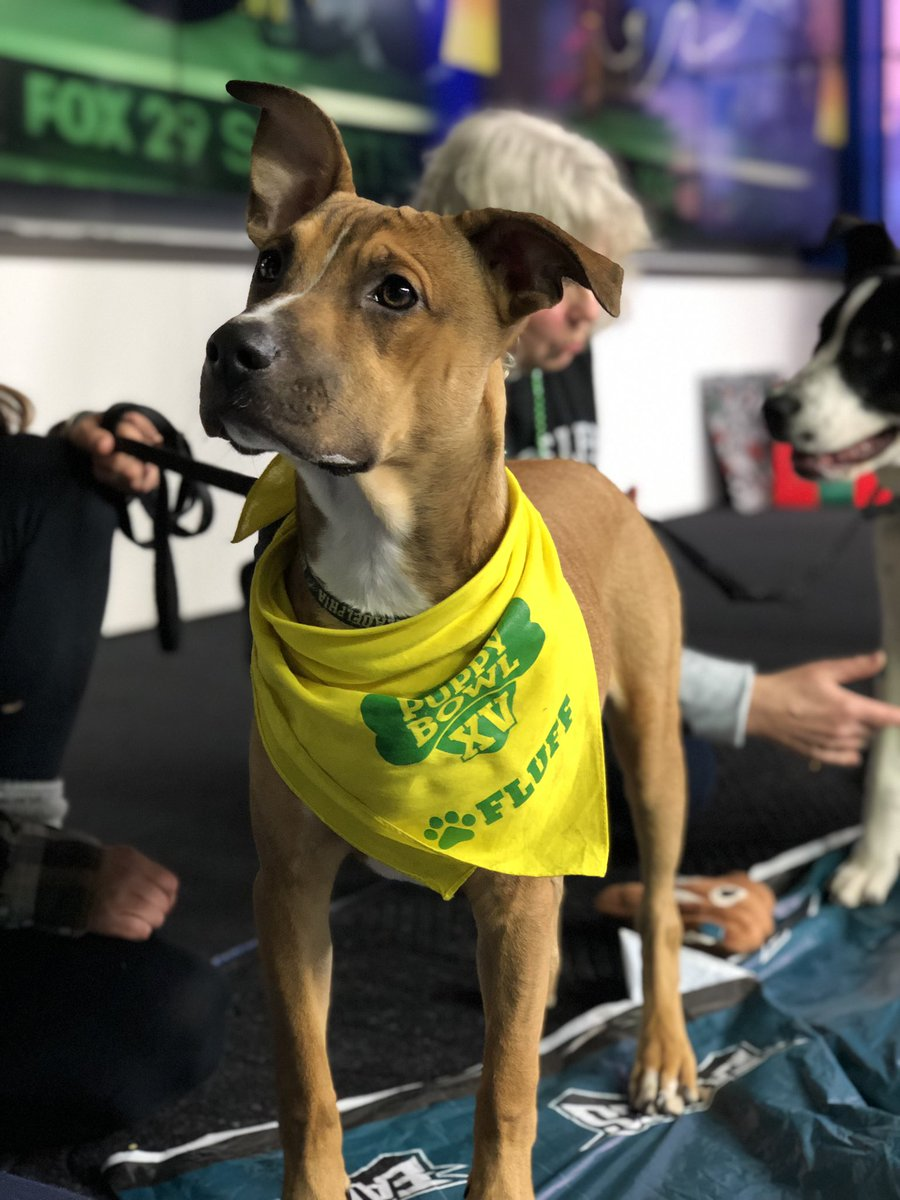 @Providence_AC has your Puppy Bowl contestants right here — Foles, Wentz and Kelsey!   #FOX29GoodDay <br>http://pic.twitter.com/1QhvRcPVWL