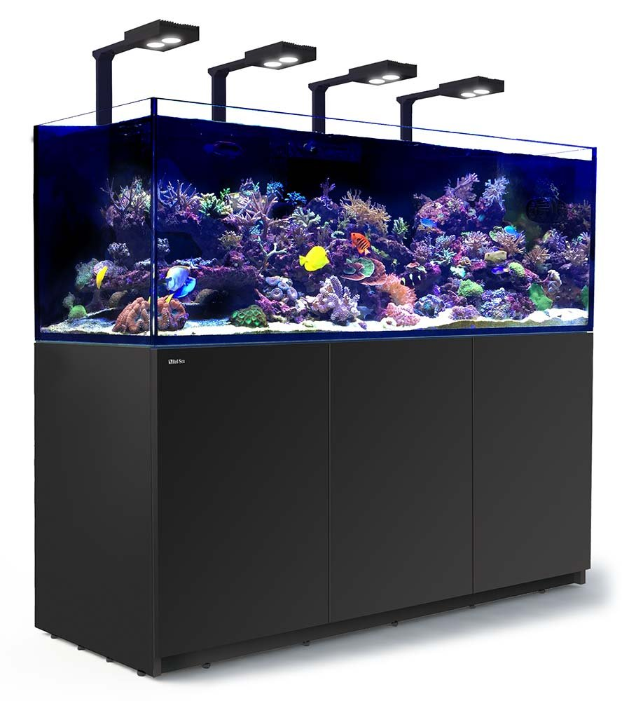 aquarium tv channel