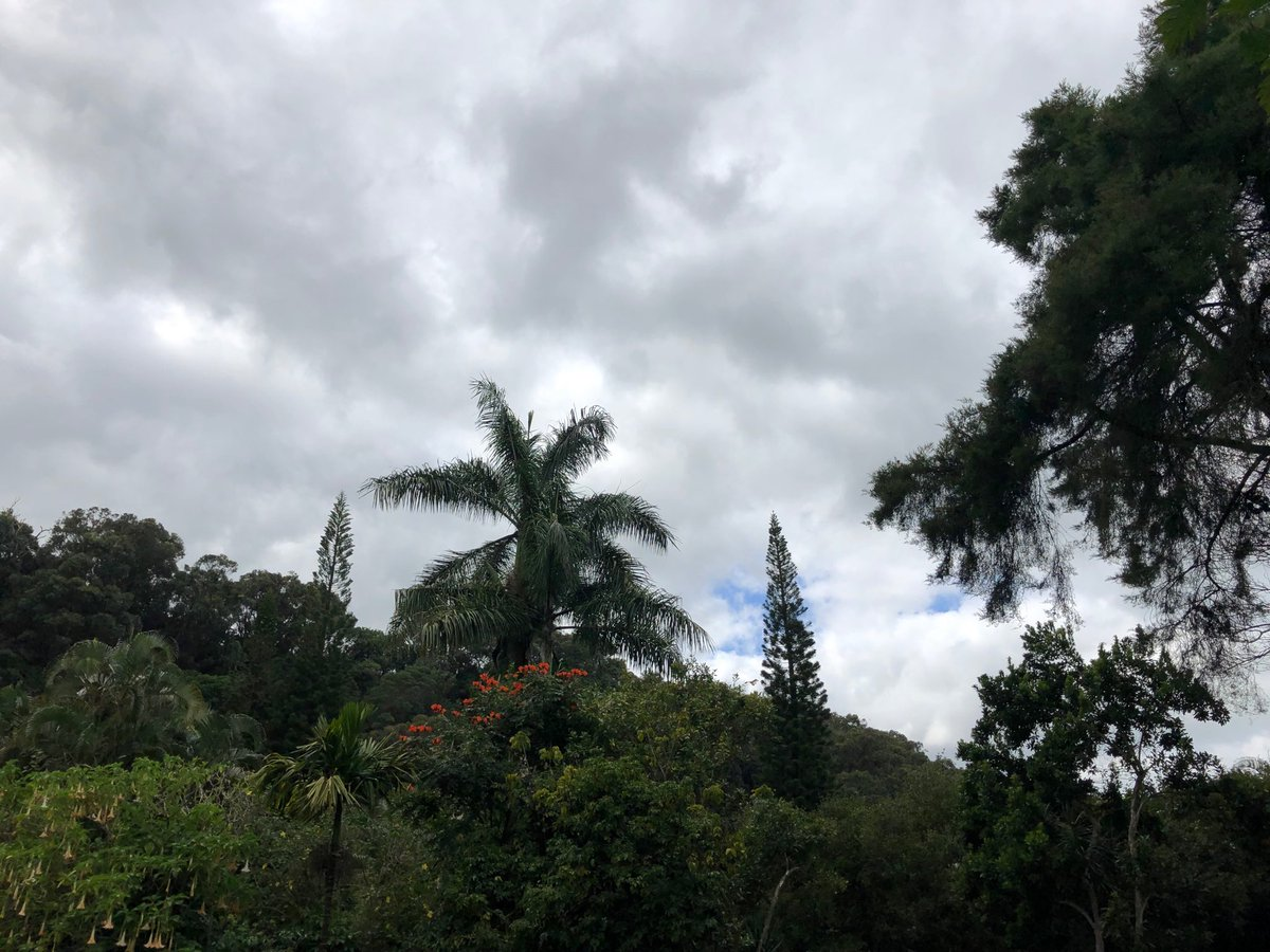 test Twitter Media - Overcast and cool in Makawao.  #cmweather #maui #sacredgarden https://t.co/5e6pTtlwTh