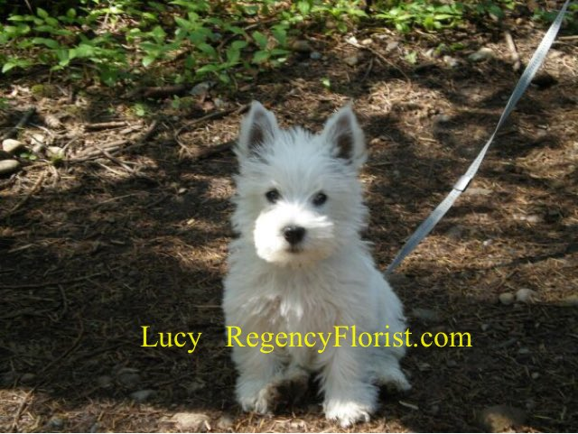Lucy is up for the 10 year challenge. How has she aged? Lucy in 2009 and Lucy in 2019 #westie #shopdog #westielife #westielove #floristlife #TenYearChallenge #regencyflorists #lucy<br>http://pic.twitter.com/Tk2QbtP16k