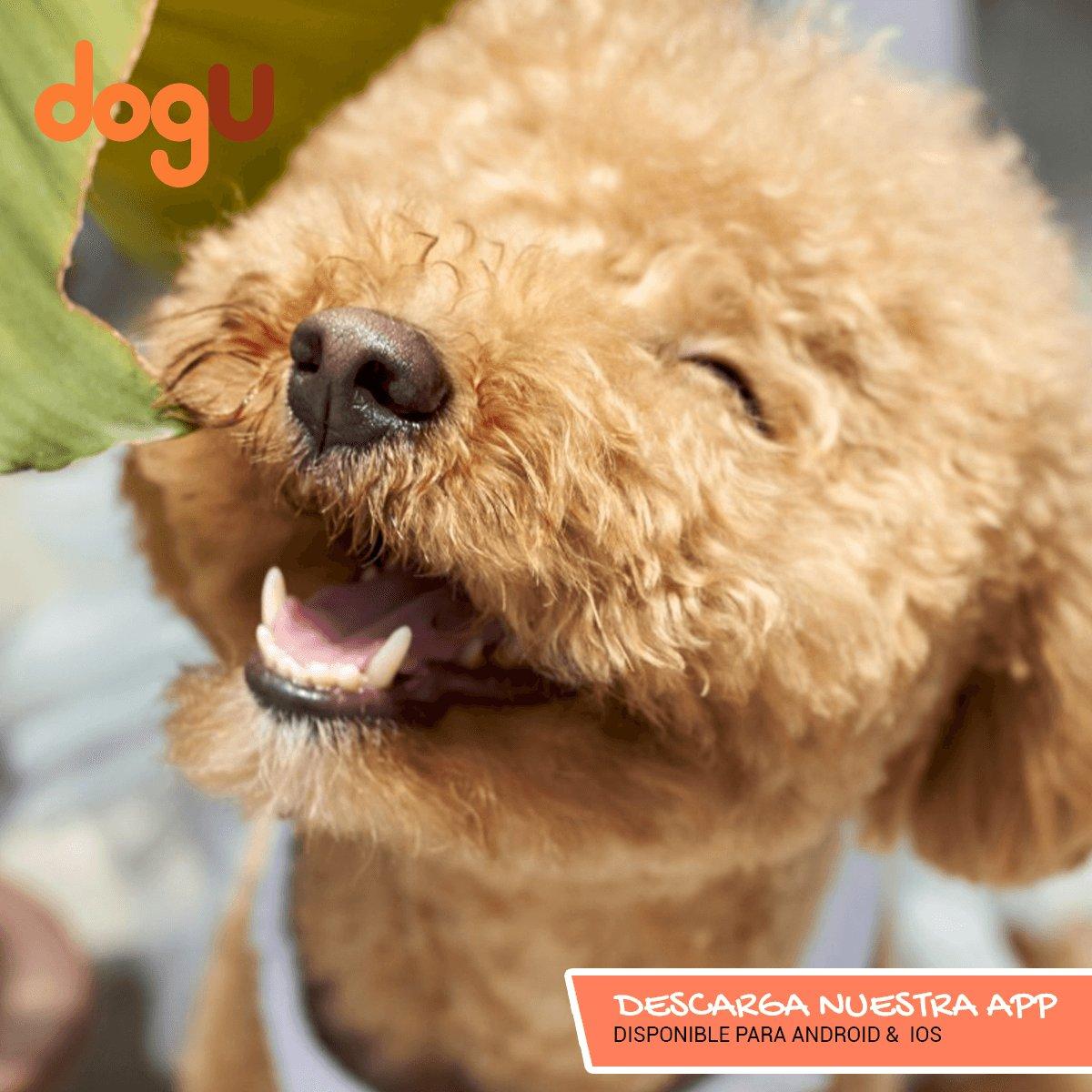 Un mundo sin perros, sería lo mismo que una vida sin sonrisas.  #YoSoyUnDogULover #DogU #LaAppQueLeDaVozATuPeludo #DescárgalaYa https://t.co/OvQgIlUA4X https://t.co/NNb5upvg0o