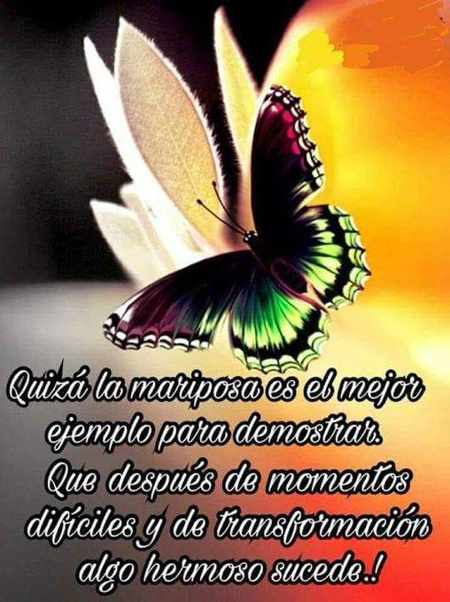 Tenemos que ser mariposa transformar cada día nuestro corazón, para llevar mejor la vida. Después de momentos difíciles, nos transformamos y algo hermoso sucede, que lo cambia todo. #BuenosDiasMundo #Felizlunes 🦋🦋🦋🦋🦋🦋🦋🦋🦋🦋 Foto