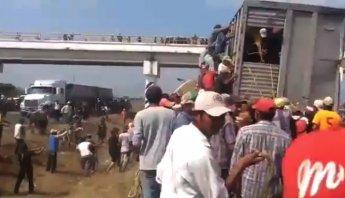 #VIDEO: Habitantes de Veracruz matan a palos a las vacas que se robaron de camión accidentado Foto