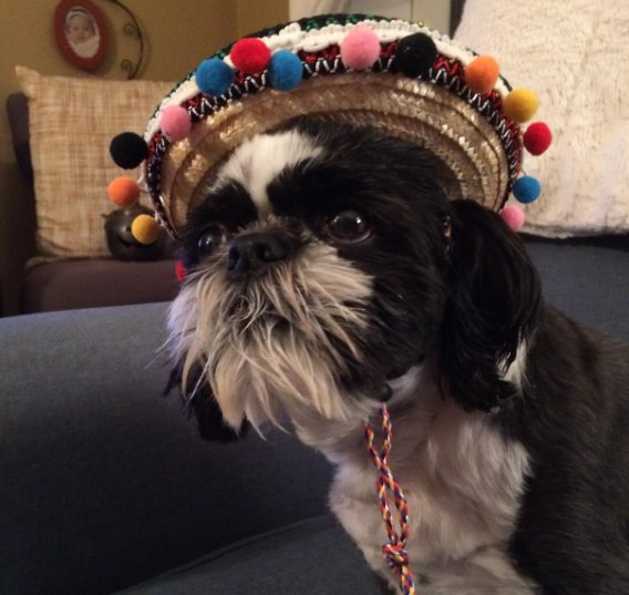 Happy #NationalDressUpYourPetDay! Do you have any fun or crazy costumes for your furry friends? We want to see them! Send a photo to newsroom@ or tweet us! Photo