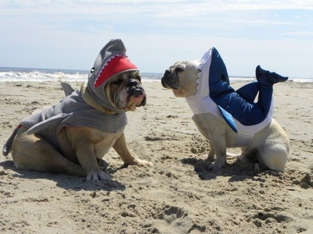 Sharks dressed as DOGS for the win! NO wait a minute 🤣🦈🐶 #NationalDressUpYourPetDay Photo