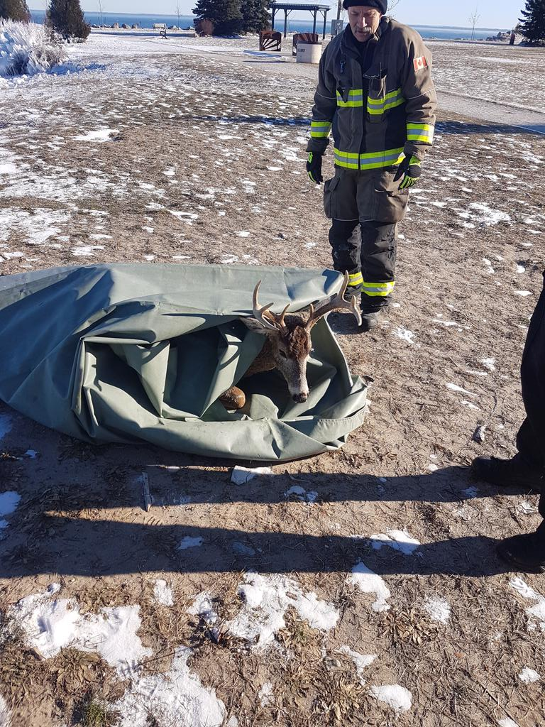 #ohdeer   Nice work by first responders!    -#Collingwood fire &amp; OPP rescue a deer from the water at Sunset Point.    Fire department says deer is resting.   @RossRparr   @OPP_CR<br>http://pic.twitter.com/dcahRaldbB