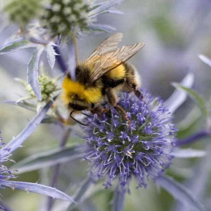 Whats on Appleby in Eden Valley: GARDENING FOR BEES